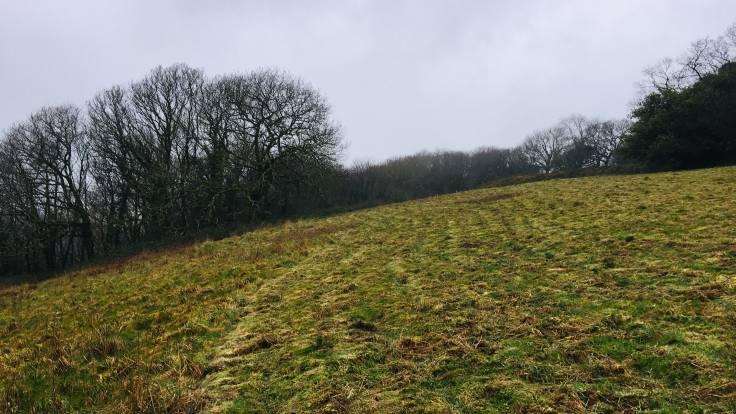 Recently mown sloping field with trees in background