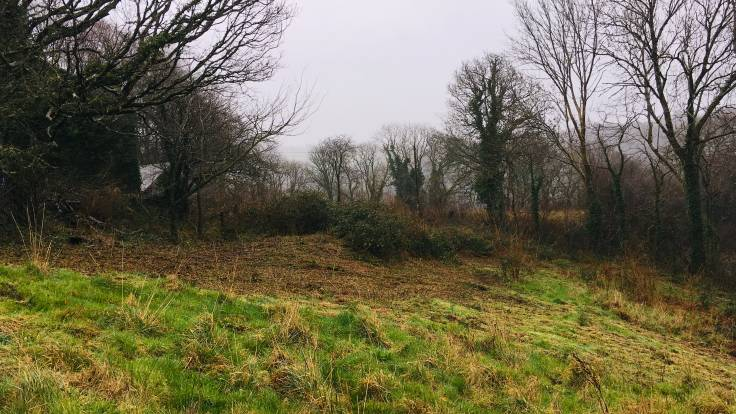 Cleared bramble area on sloping meadow