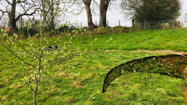 Scythe blade held in front of freshly scythed grass, next to young tree