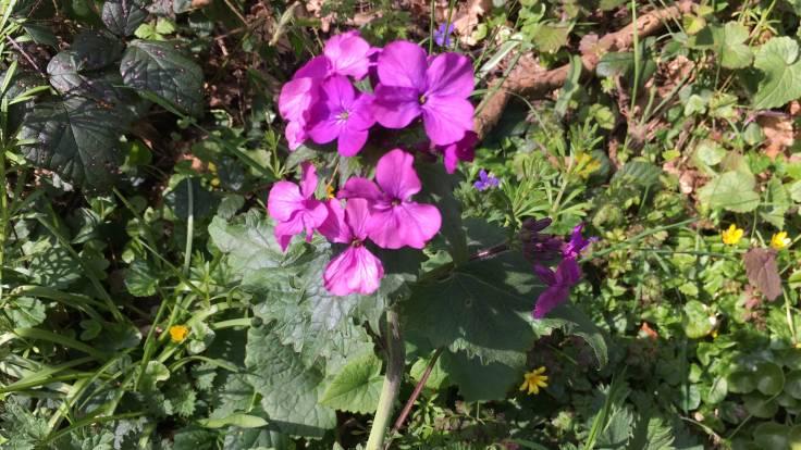 Purple headed flower