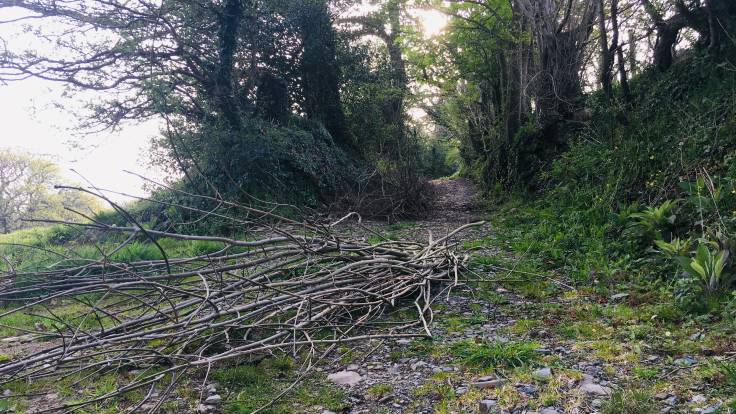 Pile of branches at bottom of track