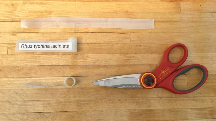 Scissors and homemade labels on wooden worktop