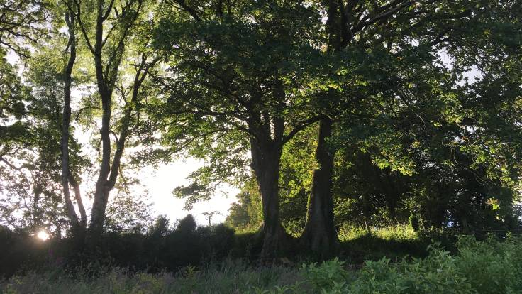 Trees silhouetted by late afternoon sun