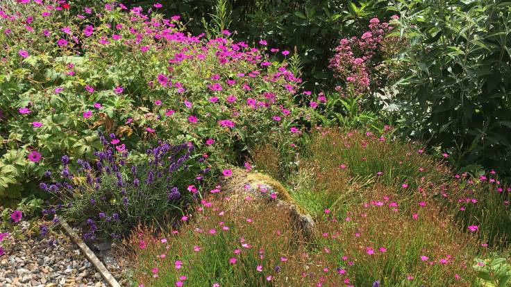 Bright pink and purple flowers next a gravel path
