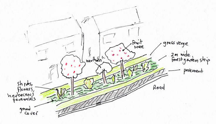 Sketch of strip of forest garden on grass verge
