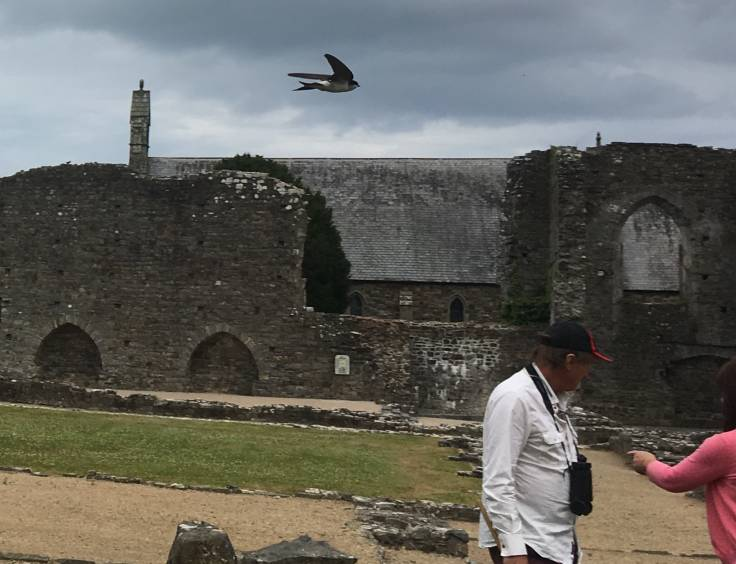 Bird flying above man in front of ruins