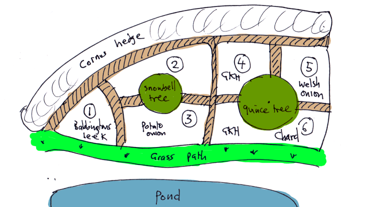 Roughly coloured sketch of perennial veg patch