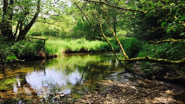 Bucolic river scene