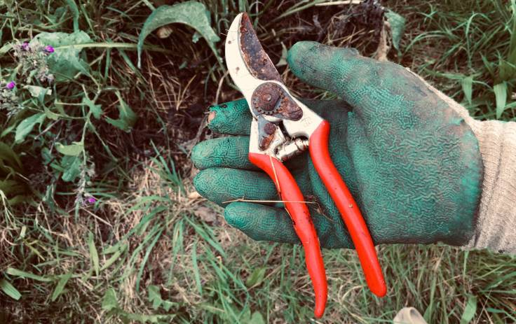 Gloved hand holding red rusty secateurs