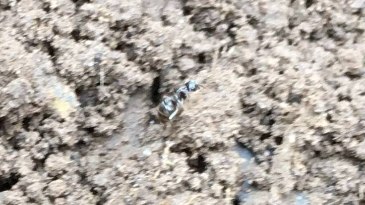 Blurry photo of ant on soil