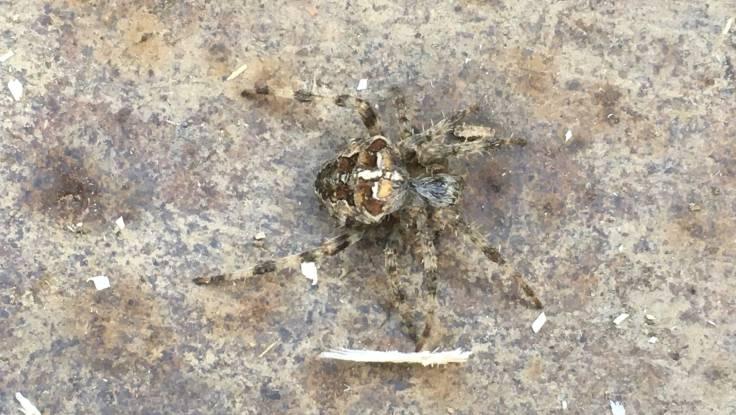 Camouflaged spider in wheelbarrow