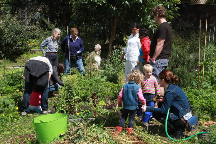 A dozen people of different ages in a community garden