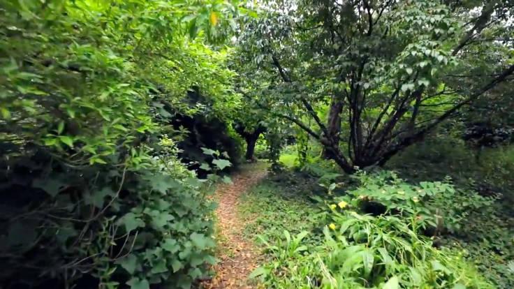 Wooded forest garden