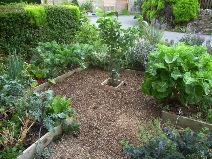 Photo of small edible ornamental garden