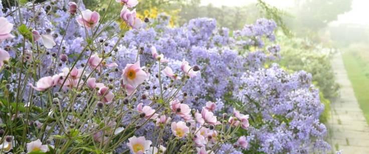 Flowery border