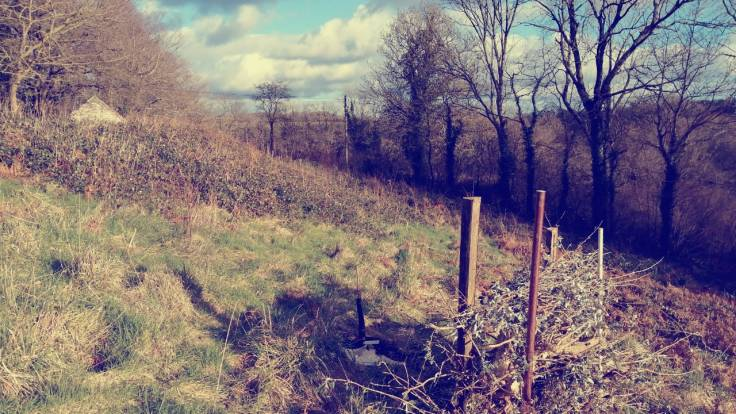 Dead hedge on sloping field with old style instagram filter