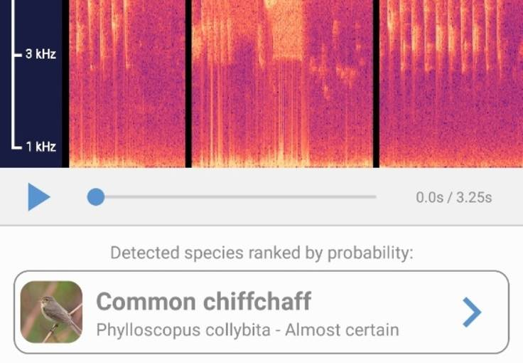 Screenshot of result for analysed birdsong, which is Common chiffchaff