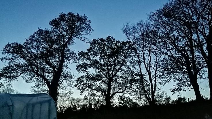 Silhouette of trees against blue evening sky