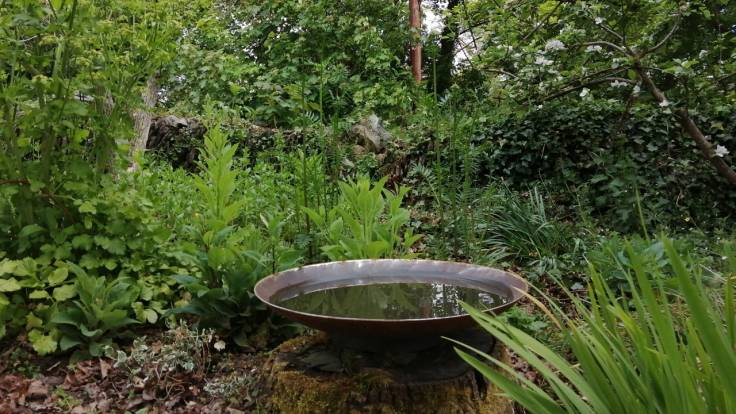 Metal water bowl in a green flower bed