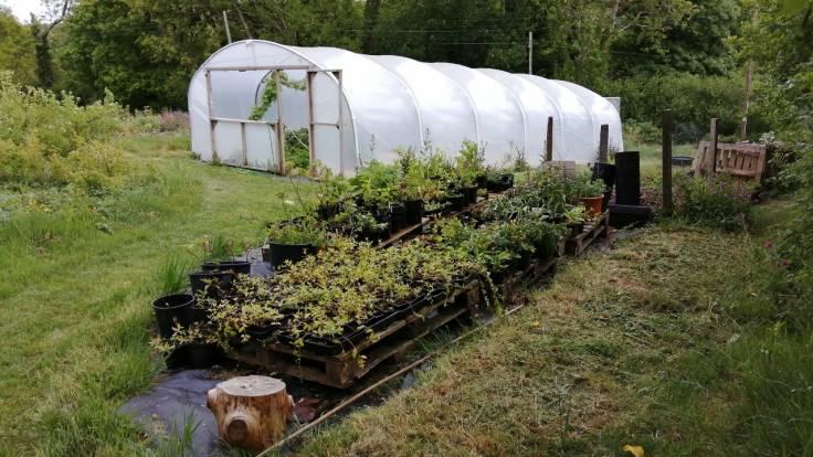 Polytunnel & plants in pots on pallets