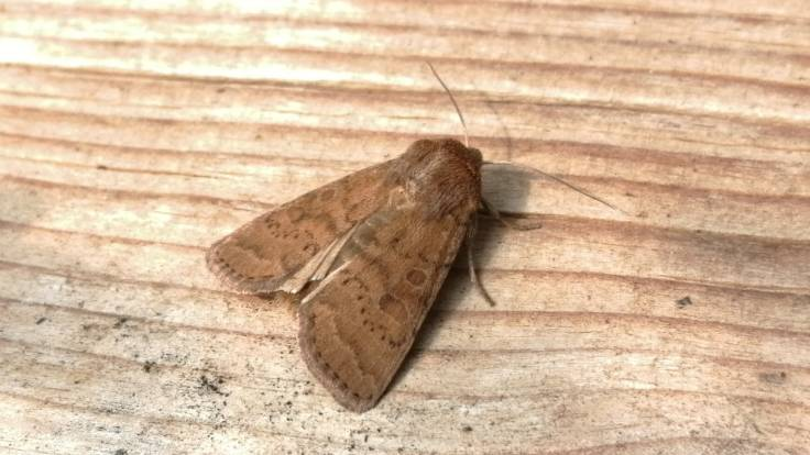 Moth on a plank of wood