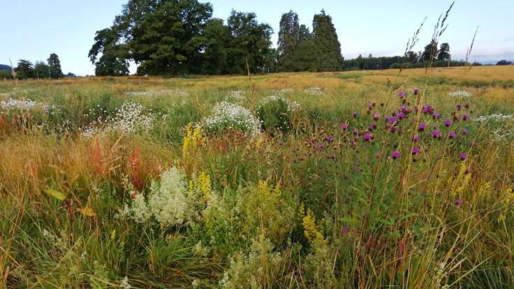 Array of wildflower combinations in field, treeline on far horizon