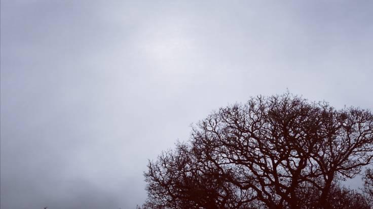 Grey cloud, leafless crown of oak tree