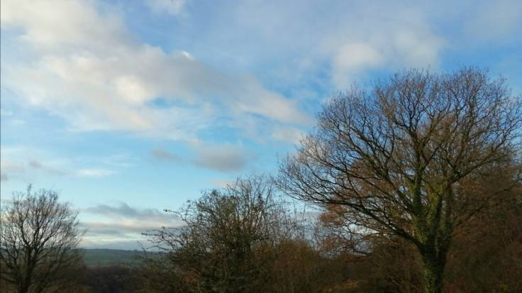 Bare trees against valley sky
