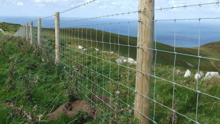 Stock fencing on coastal farm landscape