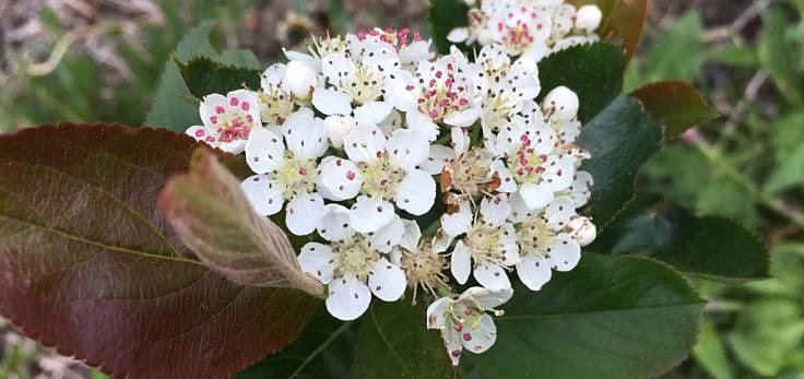 Close-up of white blossom