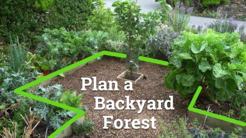 Small forest garden, title 'Plan a Backyard Forest'