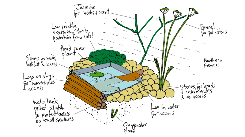 Illustration of wildlife pond made from old water tank