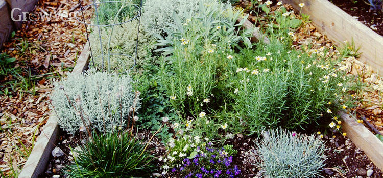 Raised bed herb gardens reduce the need for bending and stooping.