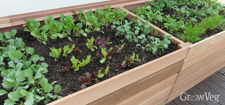 raised planters make gardening easier for gardeners who are less able to bend - How To Build A Raised Vegetable Garden