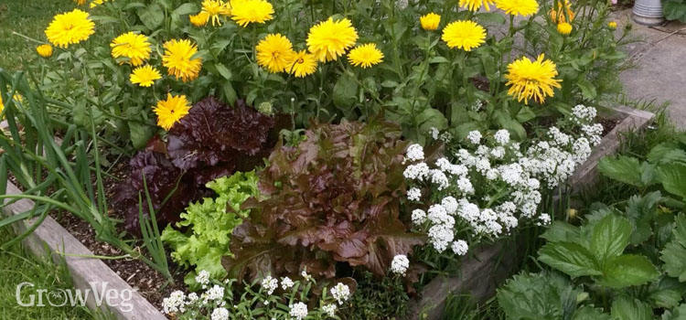 Companion Planting Made Easy – Planning A Raised Bed Vegetable Garden