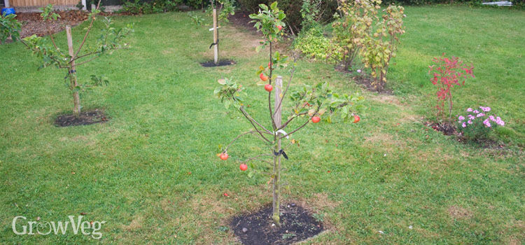 the first year for fruit trees