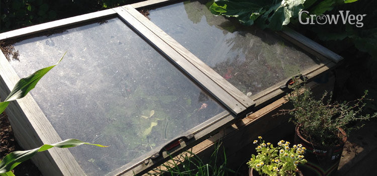 Cold frame made with old windows