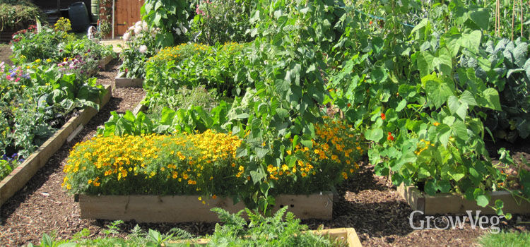 Vegetable Garden Design Choosing the Right Layout For Your Garden