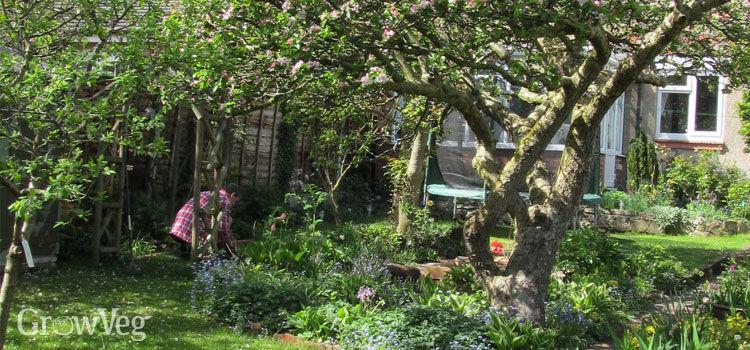 Garden with fruit tree