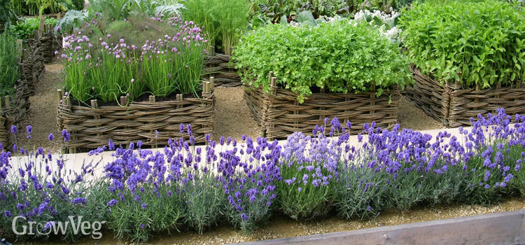 planting, tending, harvesting, and using your homegrown herbs, Beautiful flower