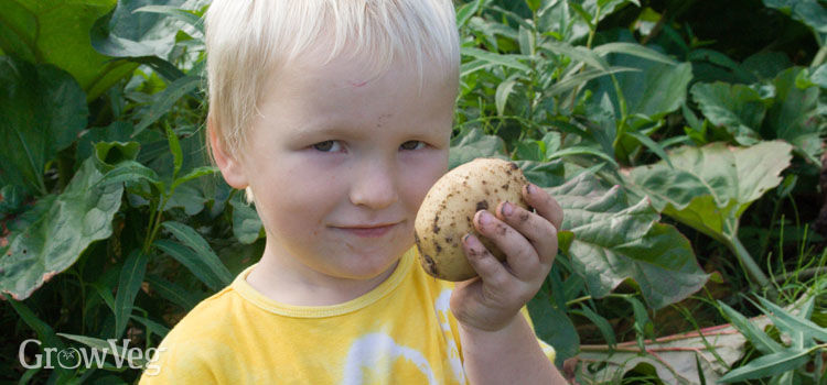 Child with a potato