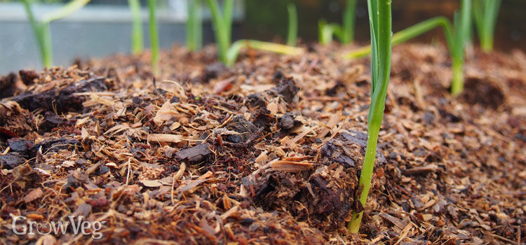 Low-fertility sawdust mulch