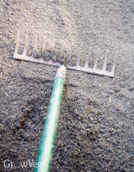 Smoothing the seed bed with the back of a rake
