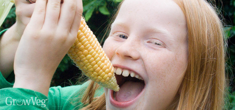 https://res.cloudinary.com/growinginteractive/image/upload/q_80/v1445617071/growblog/eating-sweetcorn-2x.jpg
