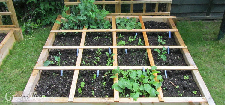 square foot garden gardening spacing uk mustard greens kale