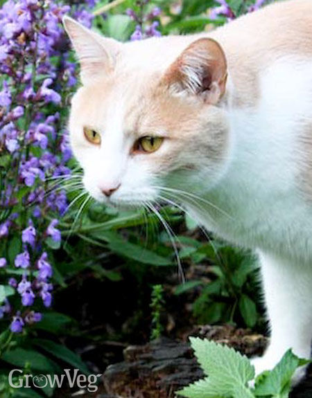 great plants for cats