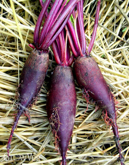 Harvested beetroots