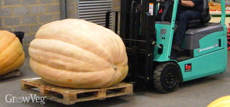 https://res.cloudinary.com/growinginteractive/image/upload/q_80/v1445805674/growblog/pumpkin-forklift-2x.jpg