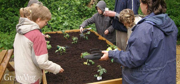 School garden lesson