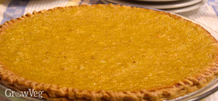 Pumpkin pie - a thanksgiving treat